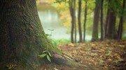 forêt avec tronc en gros plan